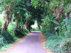 Leafy roads