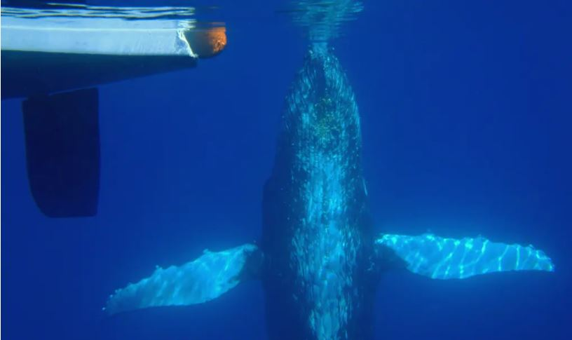 SUNK BY A WHALE